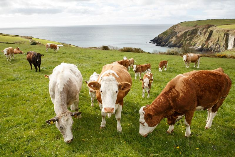 Take a West Cork Farm Tour